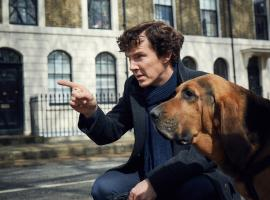 """Sherlock"" star Benedict Cumberbatch and his super cute new canine companion (Photo:  Courtesy of Robert Viglasky/Hartswood Films for MASTERPIECE)"
